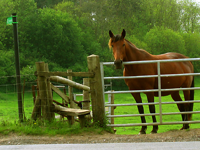 Red horse, stile, footpath, path, between Fairbourne Heath and Broomfield, Kent, England, Britain, UK
