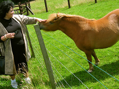 Shetland pony at Spion Kop Farm near Harrietsham