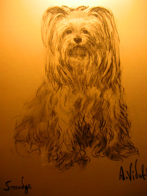 Sketch of Smudge, a Yorkshire terrier, Leeds Castle