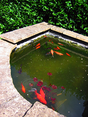 English country walks blog river towns of essex may 19th for Building a goldfish pond